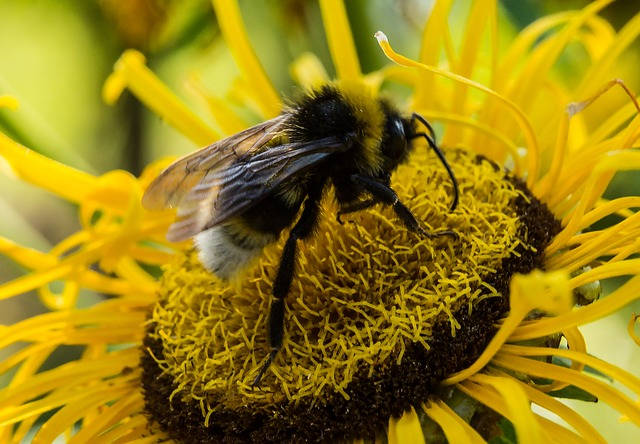 eliminar abejas en barcelona expertos control de plagas