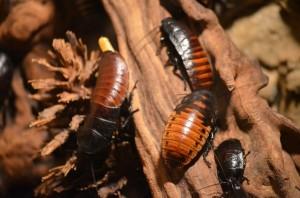 Guía de Plagas | Cucarachas