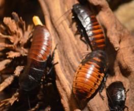 eliminar cucarachas en barcelona expertos control de plagas integral