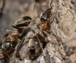 eliminar hormigas en barcelona especialistas control de plagas integral