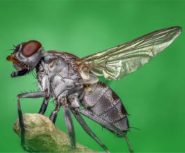 eliminar moscas en Barcelona especialistas control de plagas