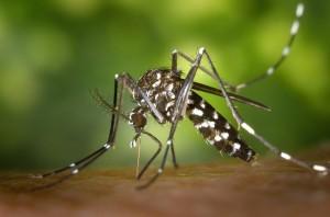 Guía de Plagas | Mosquitos