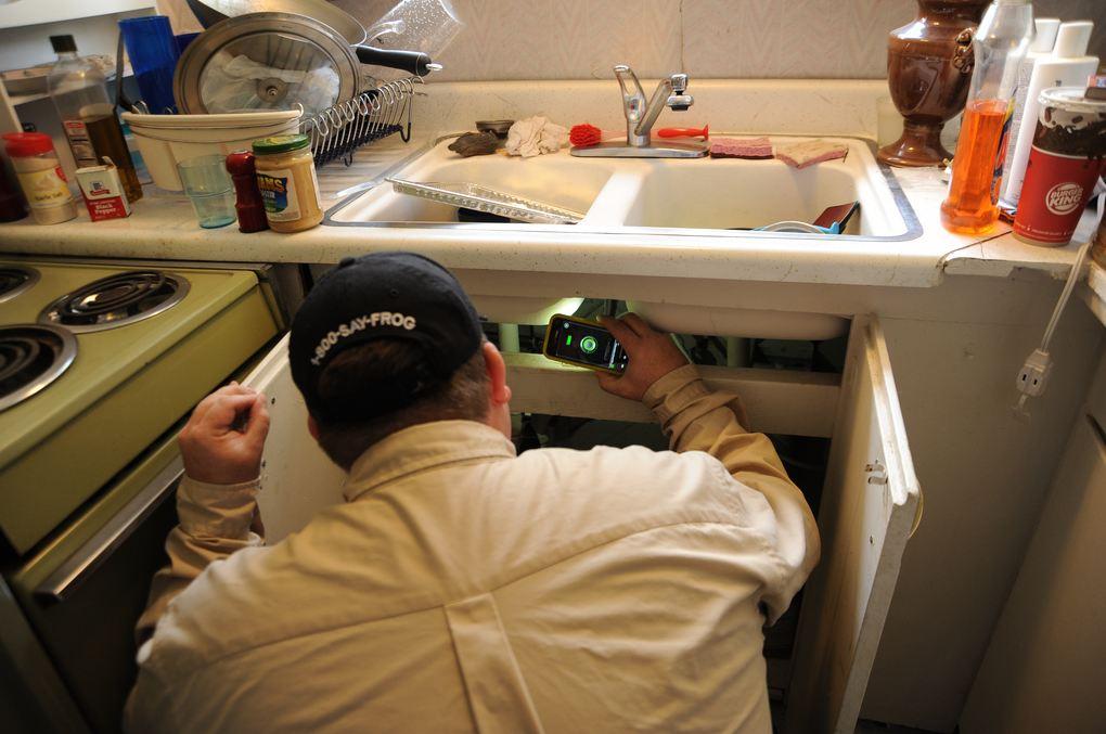eliminar hormigas en la cocina sanite